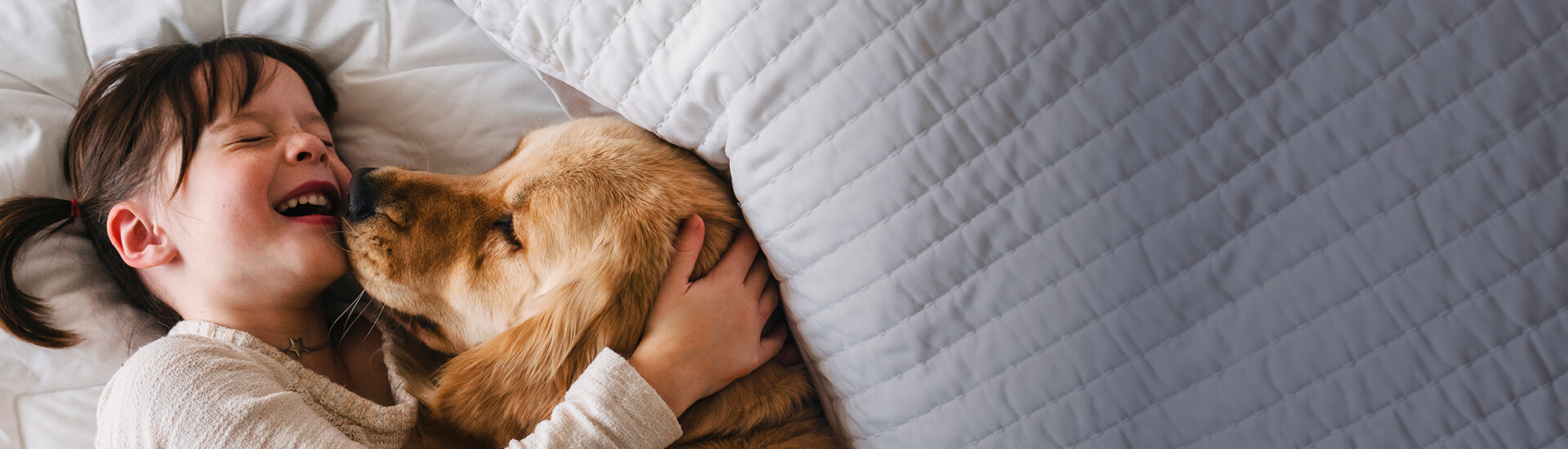 A young girl and her golden retriever dog laying in bed together